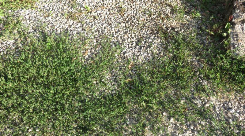 6 solutions simples pour éliminer les mauvaises herbes naturellement